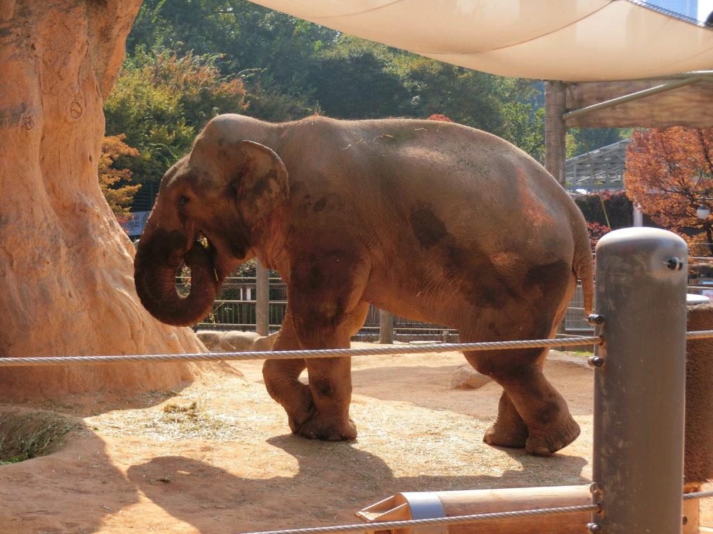 ソウル無料動物園 オリニ大公園 ゾウ